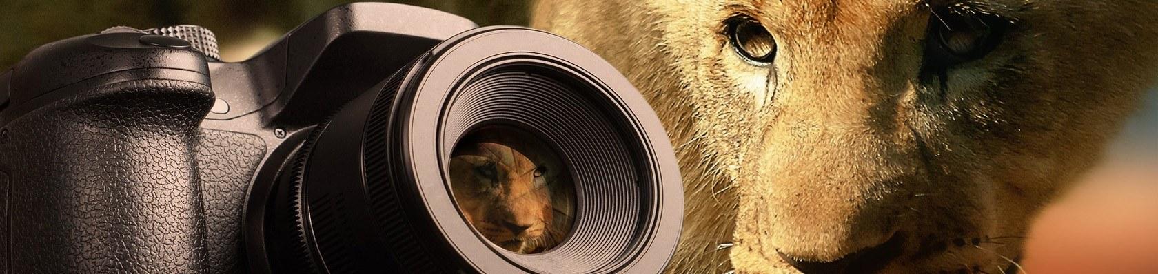 Kamera Mirrorless im Test auf ExpertenTesten.de