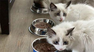 Makanan kucing terbaik kering dan basah